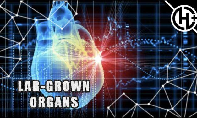 LAB-GROWN ORGANS?!: REFURBISHING, SCAFFOLDING, AND 3D BIOPRINTING