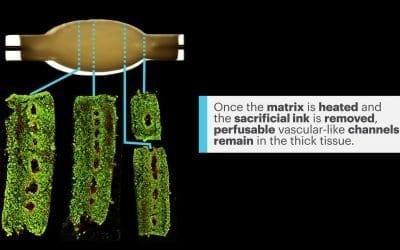 A Swifter Way Towards 3D printed Organs FINAL