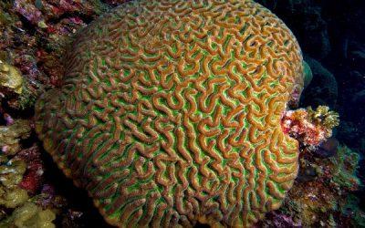 3D Printing Helps Rehabilitate Vital Coral Reefs in Hong Kong